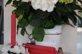 Rote Tafel-Leuchter Kerzen 100% Bienenwachs Stückpreis